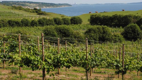 dyrehoj-vingaard